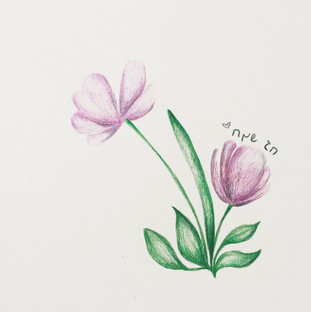 flowers | Colored Pencils