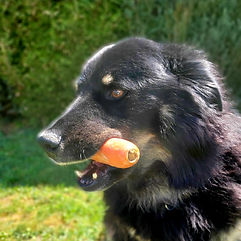 Gesunde Ernährung des Hundes