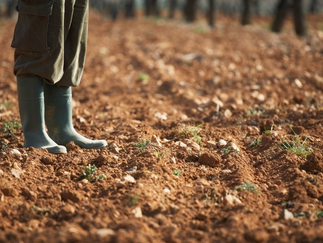 On the Soils of Our Feet - A Celebration of the Dirt Beneath Us