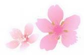fleurs .png