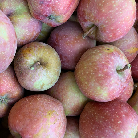 Many types of Apples including Heirloom Gravensteins