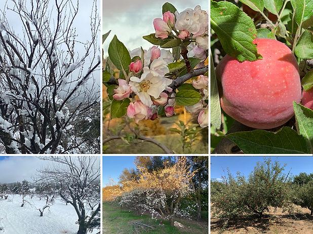 Peacefield Seasons.jpg