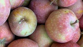 Crispy Apple Pickles