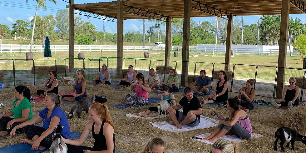 Yoga with Little Goats - You Farm - 9am
