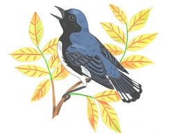 Blue Warbler