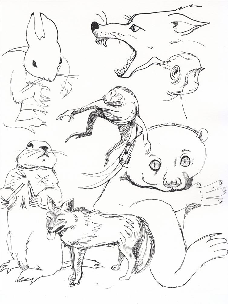 Mammals Study