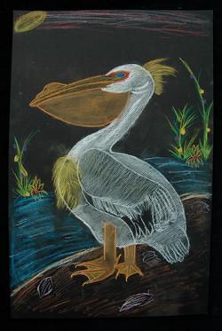 Shavonna, Pelican