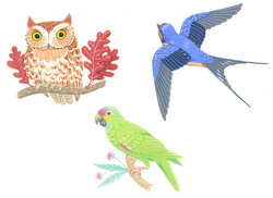 An Owl, a Swallow and a Parrot
