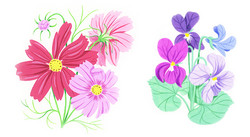 Cosmos and Pansies