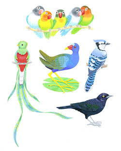 Blue and Green birds