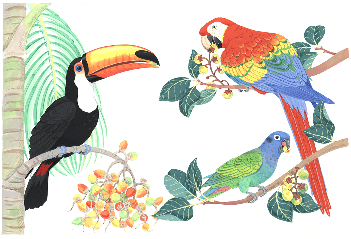 Toucan and Parrots