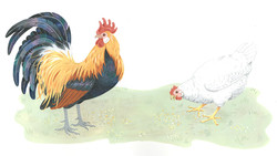 Bantam Rooster and White Hen