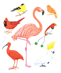 Red and Yellow birds
