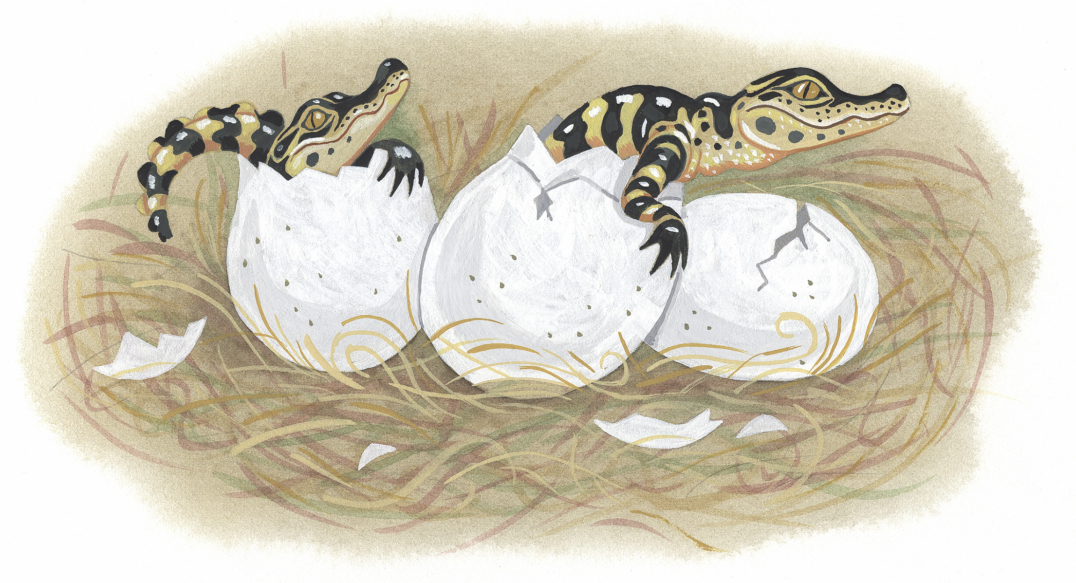 Baby Gators Hatching