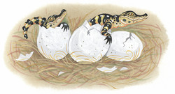 Baby Gators Hatching