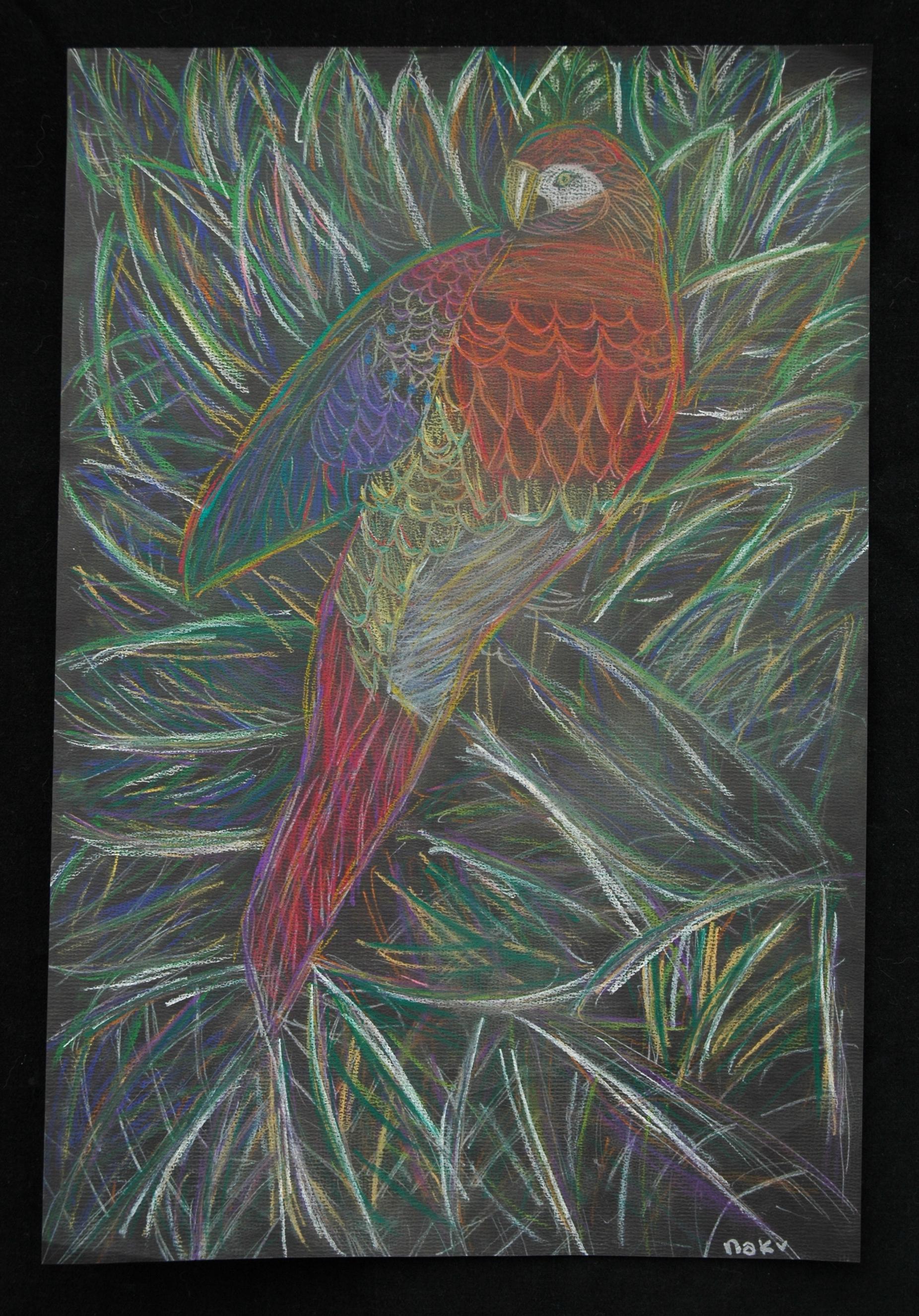 Nakijah, Parrot