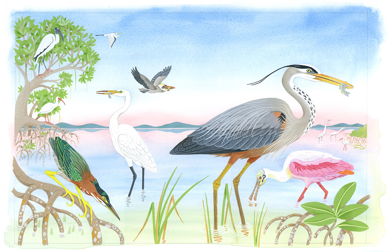 Birds of the Everglades