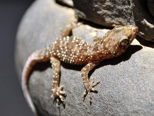 Be Afraid, Be Very Afraid: Getting in Touch with Our Inner Lizard to Drive Conversions