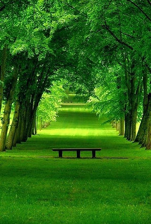 green-landscape-grass-avenue-green-thumb