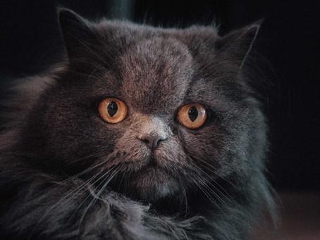 Tiergespräch mit einer betagten Katzendame