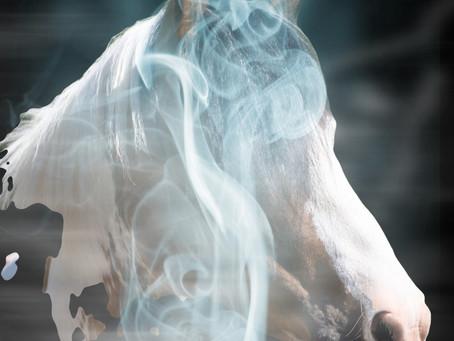 Glaube den Pferden, sie sind spirituelle Lehrer...