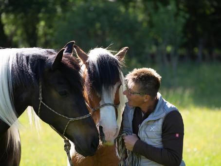 Wenn Pferde sprechen ...(Netzfund)