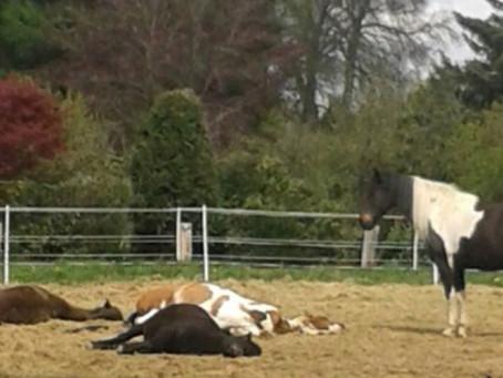 Auch Pferde haben Schlafstörungen...