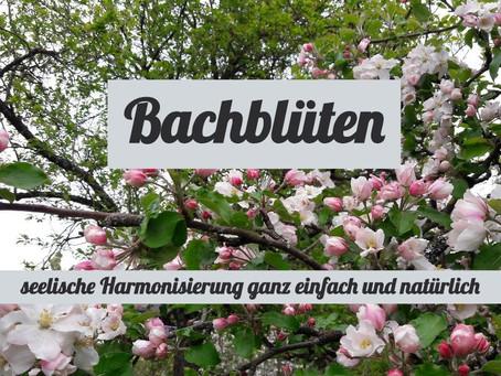 Bachblüten für Mensch und Tier... Was sind Bachblüten?
