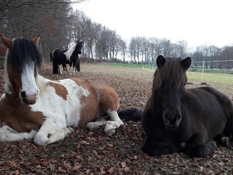 """Nachtrag zu  """" Auch Pferde haben Schläfstörungen""""..."""