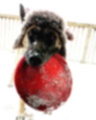 gadda snow frisbee.jpg