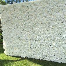 Cream hydrangea flower wall...