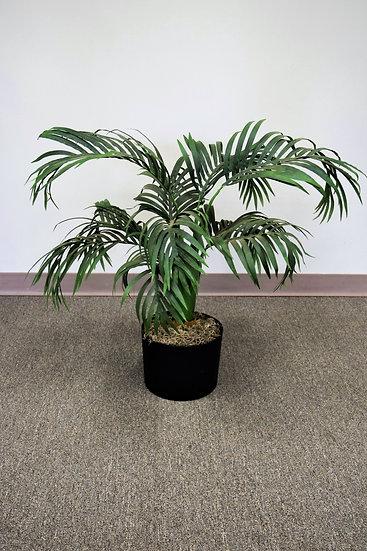 Plant 4.5 Ft. Palm