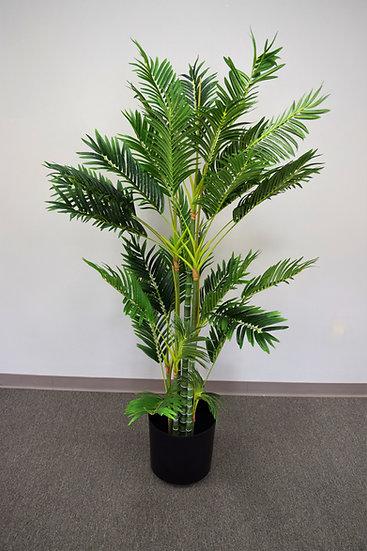 Plant 6ft. Palm
