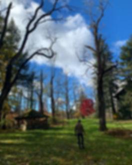 fall upstate