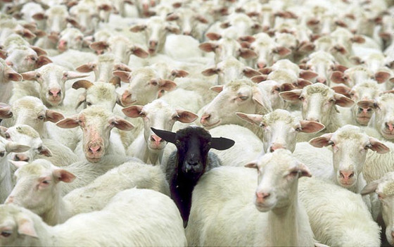 Toldot: How To Deal With The Black Sheep In Our Family