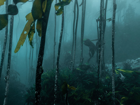 Kelp Forest, Cape Town, South Africa