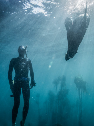 Stephan Kirsten and a seal in the kelp Forest, Cape Town, South Africa