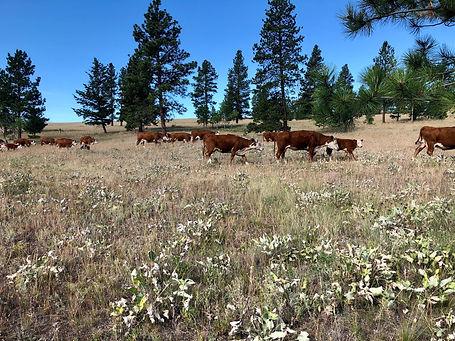 Dry pasture.jpeg