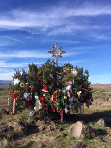Christmas Tree In The Desert.I 17 Christmas Juniper Tree At Mile Marker 255