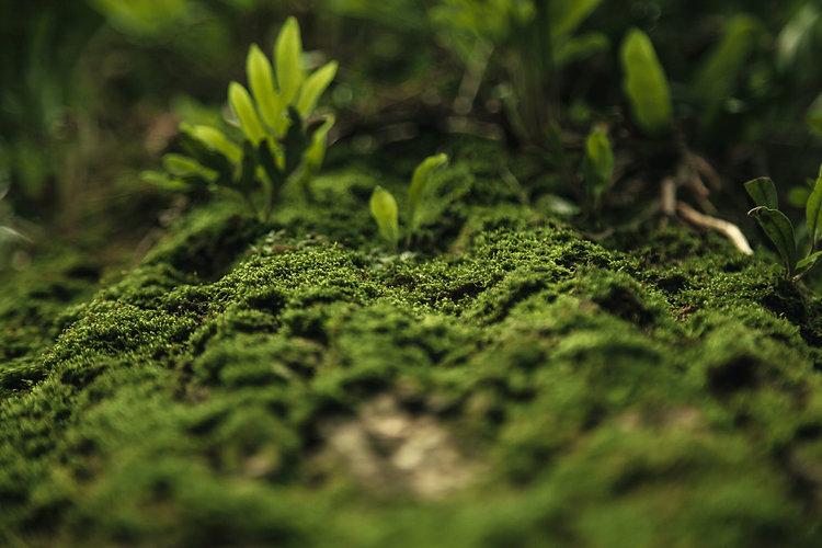 green-moss-2043740.jpg