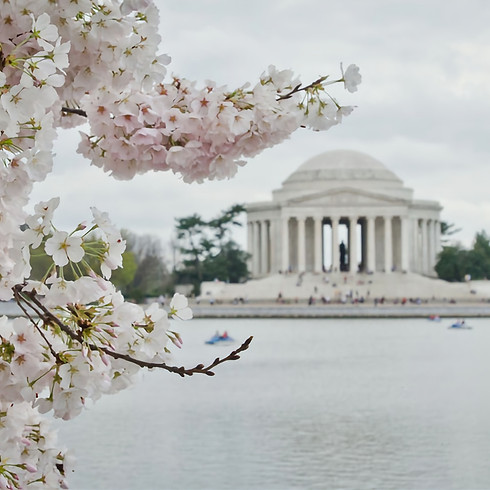 Scenic Cherry Blossom Lunch Cruise with the AOC Capitol Club