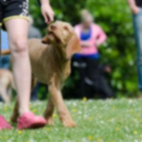 dog-school-672717_1920.jpg