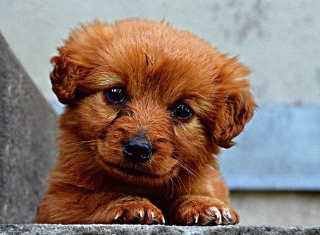 COVID-19 and Socialization: How to Help Your Puppy During this Unprecedented Time