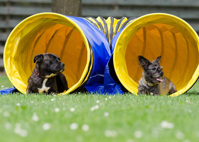 two-dogs-in-the-tunnel-750598_1920.jpg