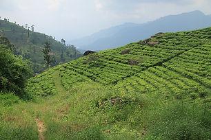 tea-3785443_640.jpeg