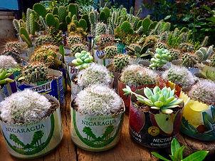 cactus-639501_640.jpeg