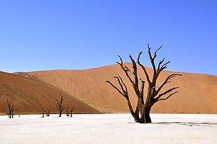 tree-64310_640.jpeg