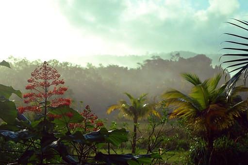 Guyane_1.jpg