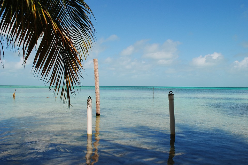 Belize_Quetzal Motivo_1
