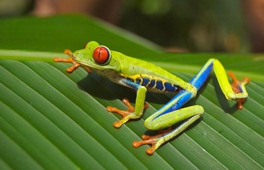 Costa_Rica_2